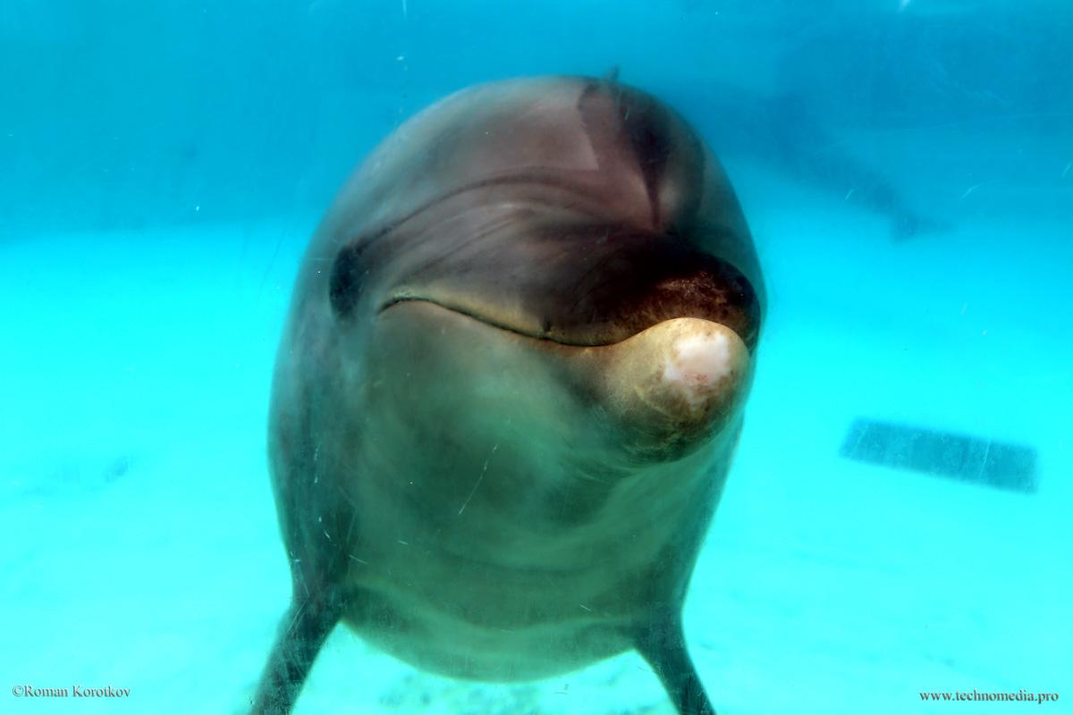 Парк аттракционов Sea World Сан-Диего, Калифорния, дельфин