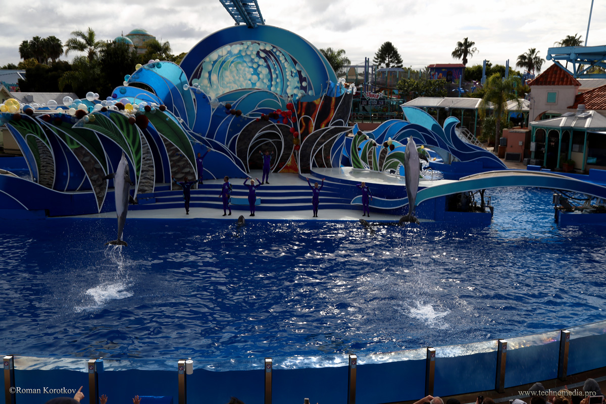 Парк аттракционов Sea World Сан-Диего, Калифорния, Шоу дельфинов