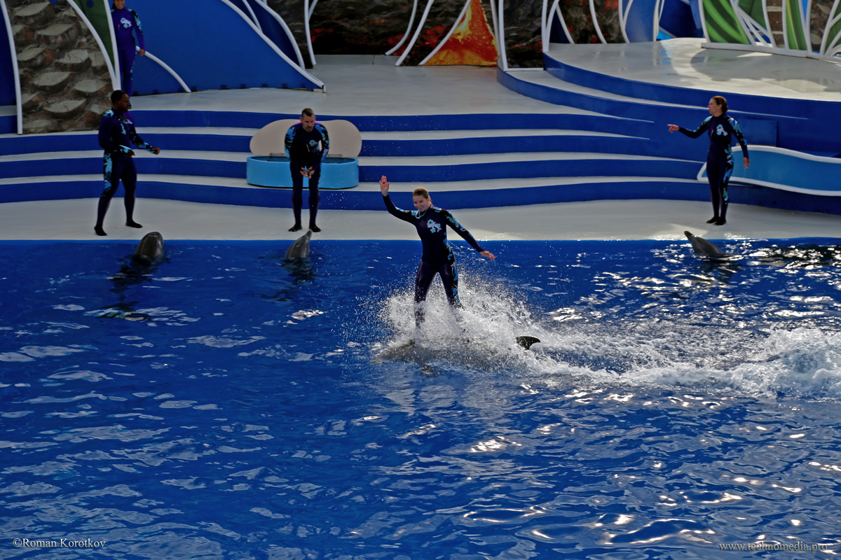 Парк океанариум Sea World Сан-Диего, черепаха
